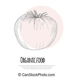 Hand drawn tomato over white background
