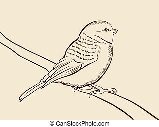 Vector hand drawn picture of tomtit bird