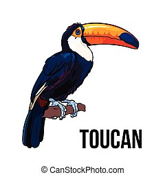 Hand drawn toucan seating on a tree branch, vector illustration