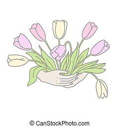 hand-drawn, tulipaner, womans, bouquet, illustration, hænder