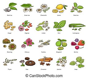 Hand drawn types of loose leaf tea and decoration - colorful...