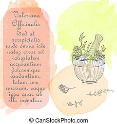 Hand Drawn Valerian Plant Parts to be Pounded in the Mortar. Watercolor Spots Placed as the Backdrop. Herbal with Latin Name Valeriana Officinalis. Leaflet for Herbal Medicine, Cosmetology, Food Industry.