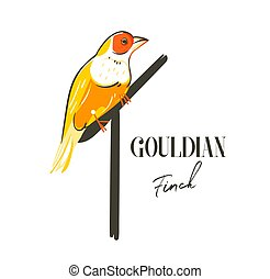Hand drawn vector abstract cartoon summer time graphic decoration illustrations art with exotic tropical rainforest Gouldian finch bird isolated on white background