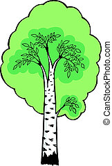 illustration of birch