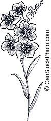 Hand drawn vector flower