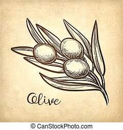 Hand drawn vector illustration of olive branch.