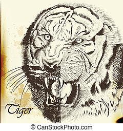 Hand drawn vector  portrait of tige