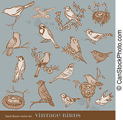 Hand drawn vector set: birds - variety of vintage bird...