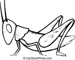 Hand drawn, vector, sketch illustration of grasshopper