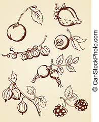 set of vector hand drawn berries in retro style