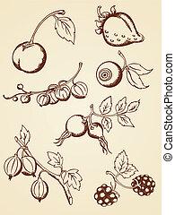 hand drawn vintage berries - set of vector hand drawn ...