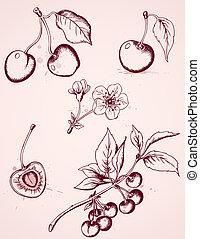 hand drawn vintage cherry