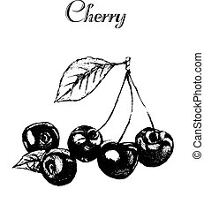 Hand drawn vintage isolated cherry