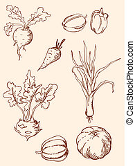 hand drawn vintage vegetables - set of vector hand drawn...