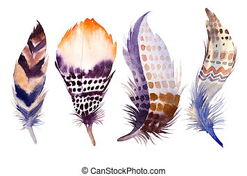 Hand drawn watercolor feather set. illustration isolated on whit