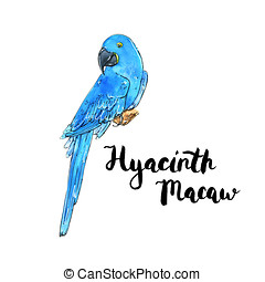 hand drawn watercolor isolated bird Hyacinth Macaw with handwritten words lettering on white background