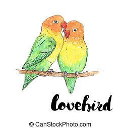 hand drawn watercolor isolated bird lovebird with handwritten words lettering on white background