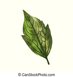 Hand drawn watercolor leaf isolated on white background, digital painting