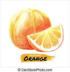 Hand drawn watercolor orange painting on white background. Vector illustration of fruit orange.
