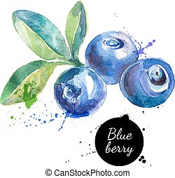 Hand drawn watercolor painting blueberry on white...