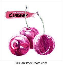 Hand drawn watercolor painting cherry on white background. Vector illustration of berries.