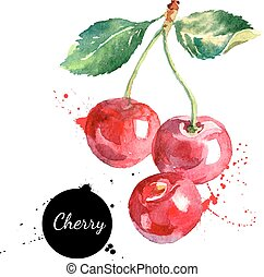 Hand drawn watercolor painting cherry on white background....