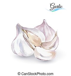 Garlic - Hand-Drawn Watercolor Painting Garlic on White...