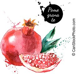 Hand drawn watercolor painting pomegranate on white background