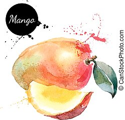 Hand drawn watercolor painting mango on white background -...