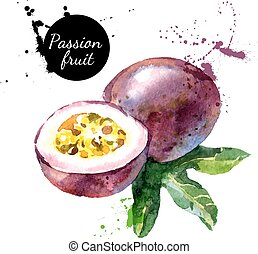 Hand drawn watercolor painting on white background. Vector...