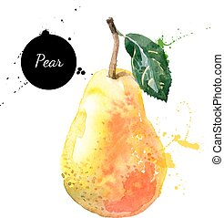 Hand drawn watercolor painting pear on white background -...