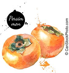 Hand drawn watercolor painting persimmon on white background