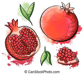 Hand drawn watercolor painting pomegranate on white background. Sketch food vector illustration.