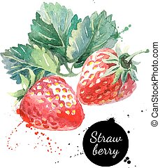 Hand drawn watercolor painting strawberry on white...