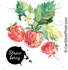 Hand drawn watercolor painting strawberry on white background