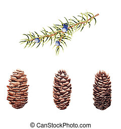 Hand drawn Watercolor set of pine cones and juniper branch isolated on white background.