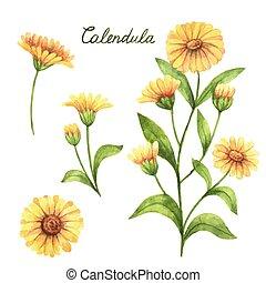 Hand drawn watercolor vector botanical illustration of ...