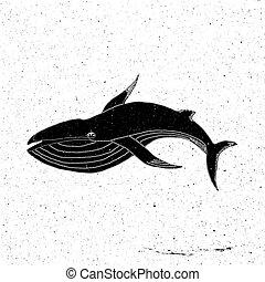 Hand drawn Whale