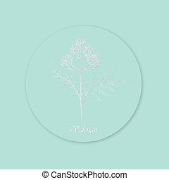 Hand Drawn White Bush of Valerian Placed on the Round Substrate with Shadow. Curved Effect Made with White Color and Grey Shadowing. Same Delicate Blue Background and Substrate Color.