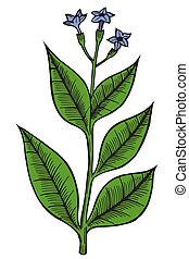 Hand drawn wild flower. art illustration isolated on white