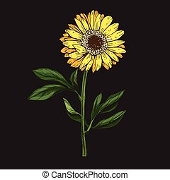 Hand drawn yellow daisy flower with stem and leaves isolated on black background. Botanical vector illustration