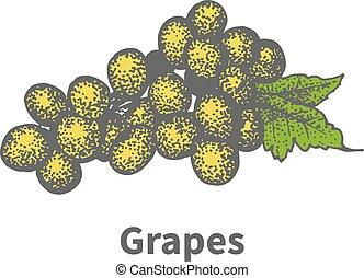 Hand-drawn yellow vine ripe grapes green leaf - Vector...