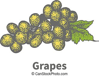 Hand-drawn yellow vine ripe grapes green leaf - Vector...