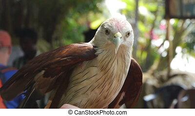 Hand eagle