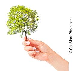 hand, en, kleine boom