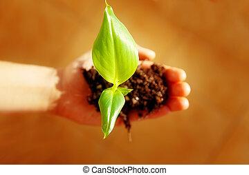 hand, en, plant., enviroment, concept., verdoezelen, achtergrond.