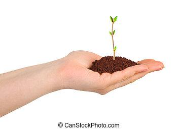 hand, en, plant