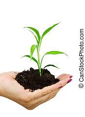 hand, en, plant, vrijstaand, op wit, achtergrond