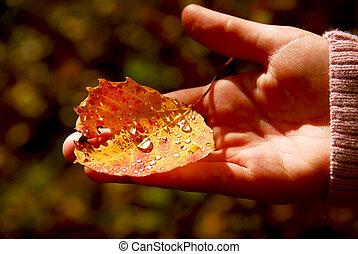 Hand fall leaf - Child\\\'s hand holding fall aspen leaf...