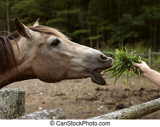 Horse reaching for for grass in a man's hand.